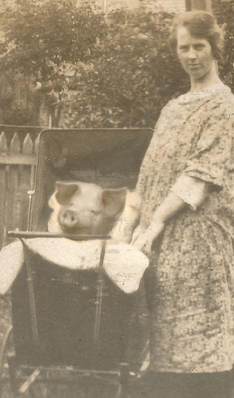 This-Little-Piggie